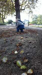 Conkers are a big thing in Bonn