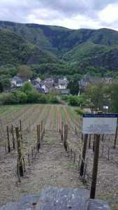 Altenhar Vineyards